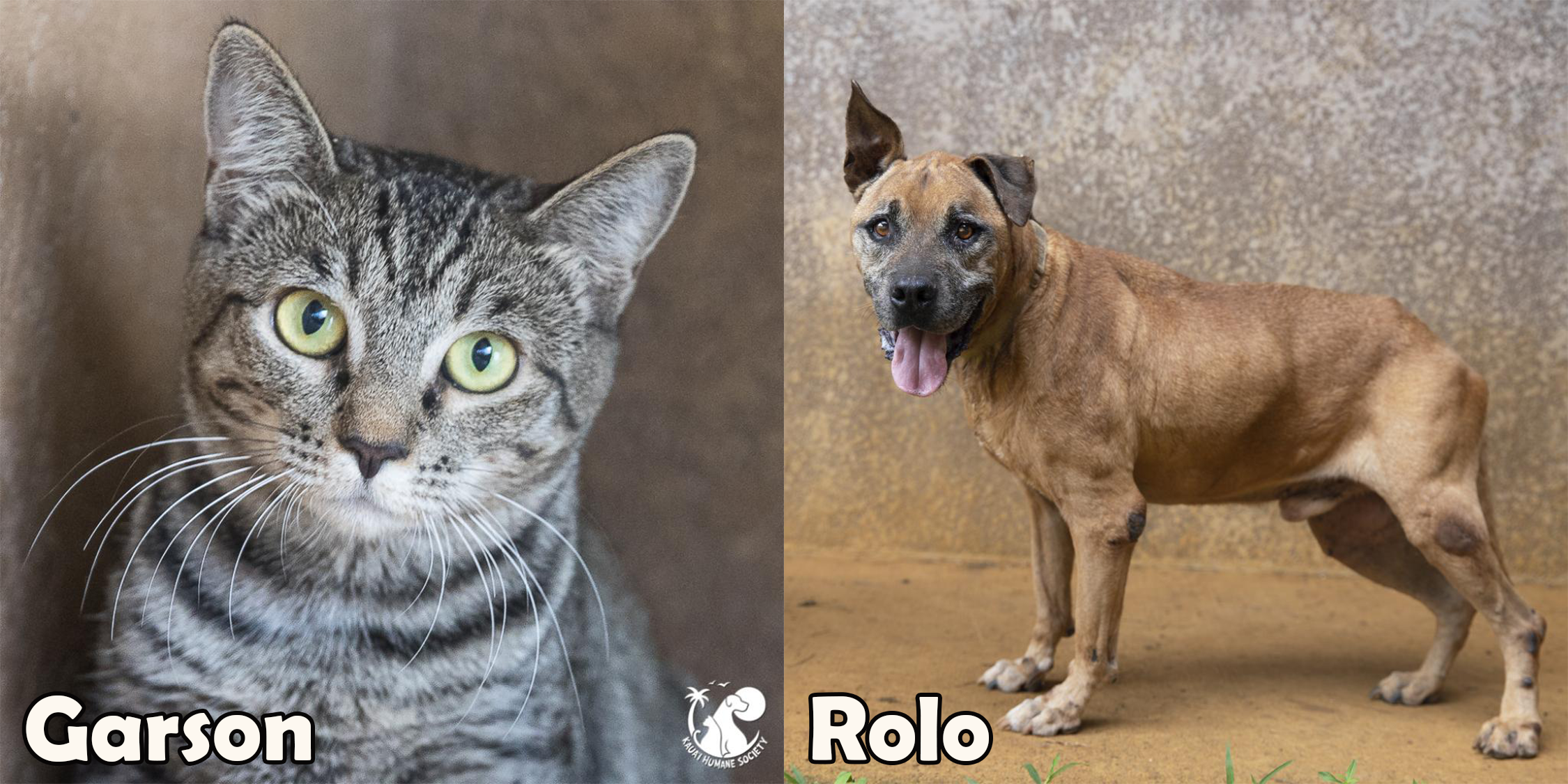 Garson and Rolo are our two featured pets of the month.